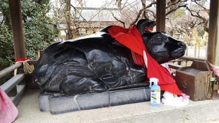 北野天満宮牛と消毒スプレー