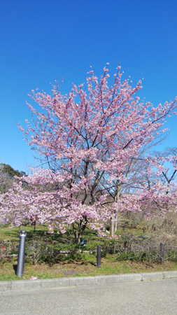 京都府職ブルエン20200312