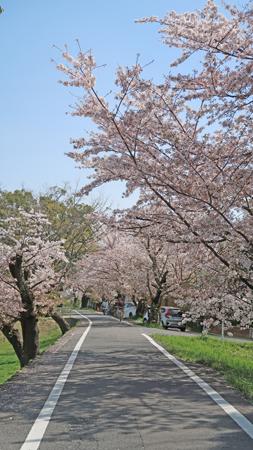 桂川桜の道20210401