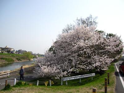 2018春桜