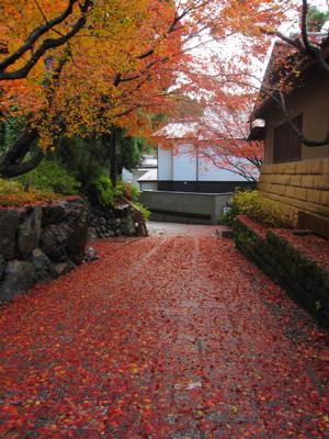 紅葉の絨毯201501210